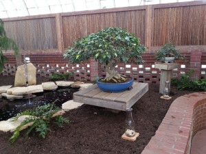 Bonsai Show at Phipps - Voting