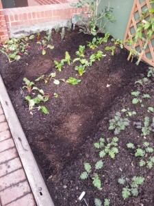 Vegetable Garden at Phipps