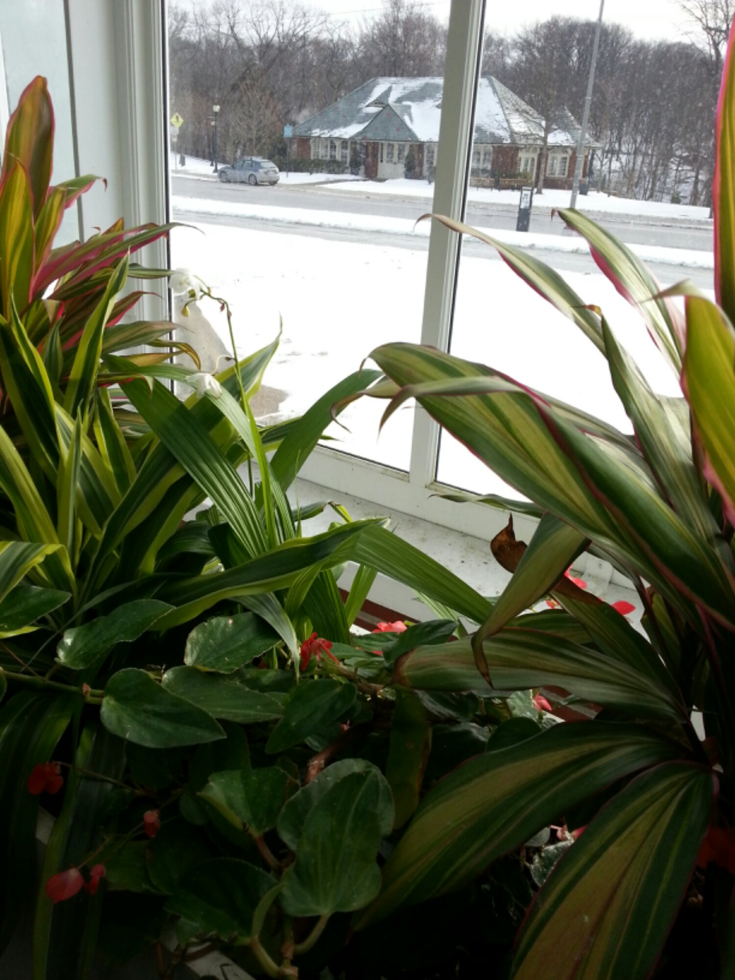 Observing Winter from inside Phipps