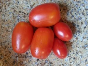 Juliet tomatoes meet store tomatoes