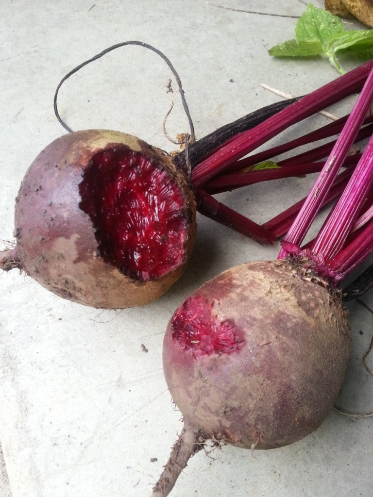 Let them eat ... beets