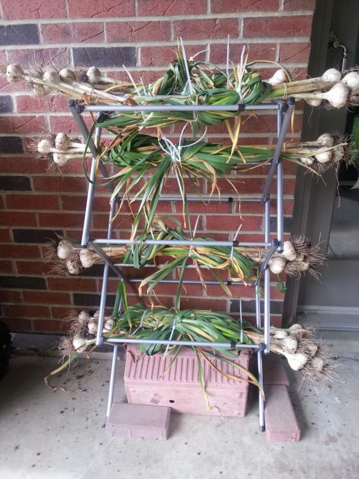 Metal Laundry Rack from Lowe's: Garlic Curing