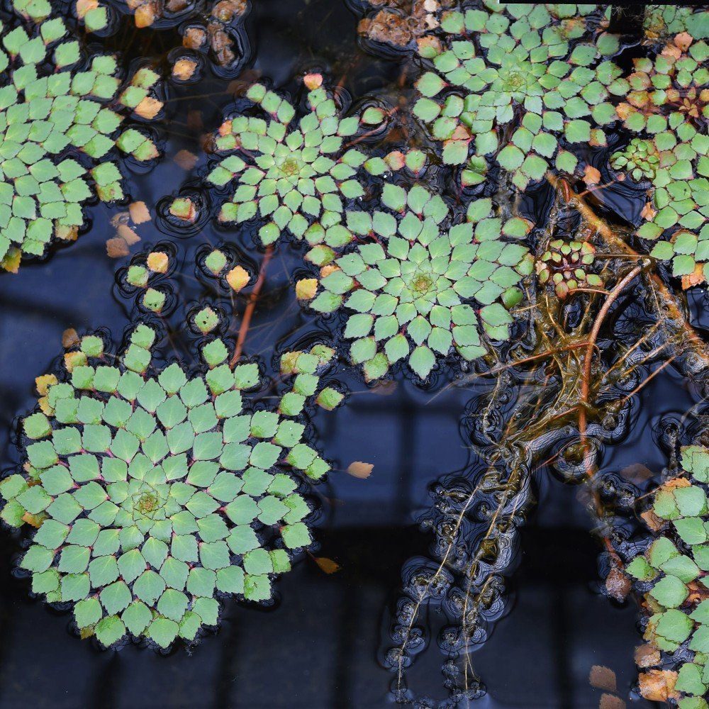 Mosaic Plant Phipps Conservatory