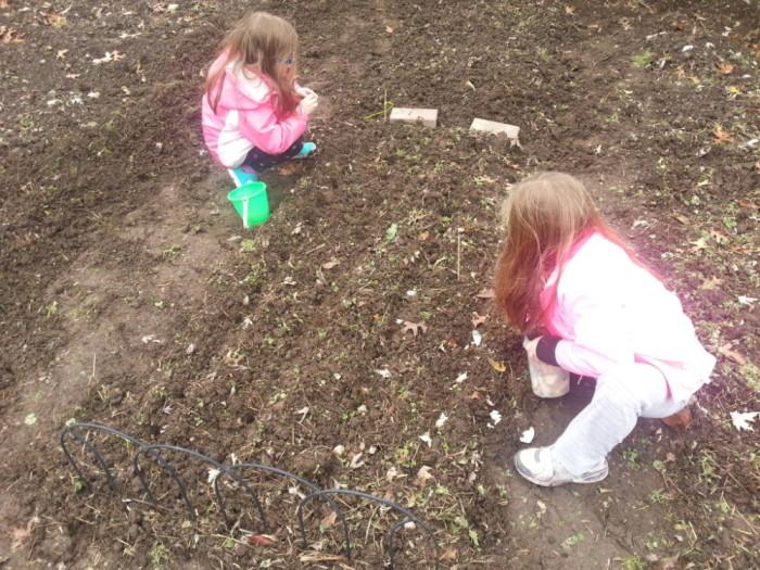 Kids Planting Garlic