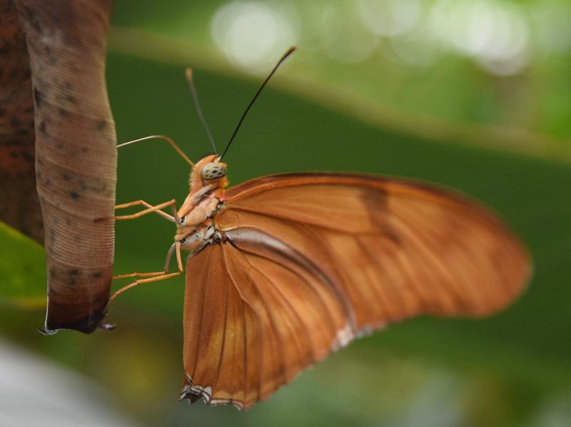 Phipps Conservatory Gardens - Butterflies