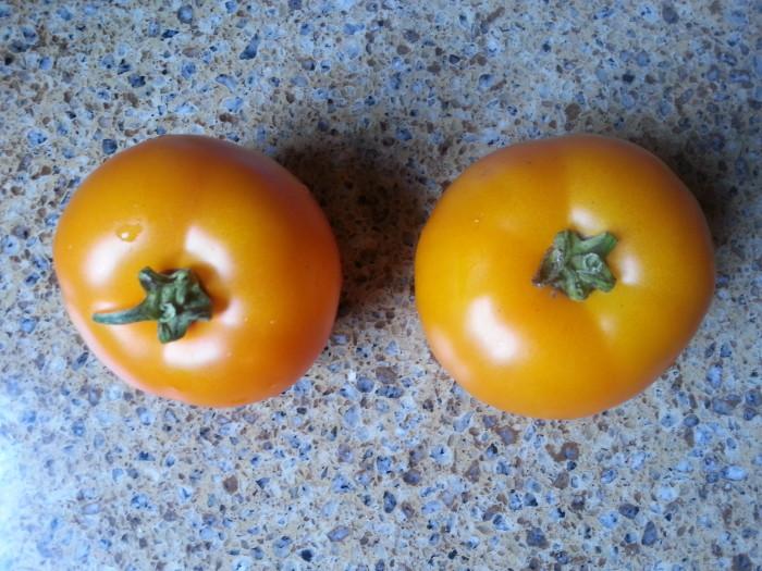 Tangerine Tomatoes