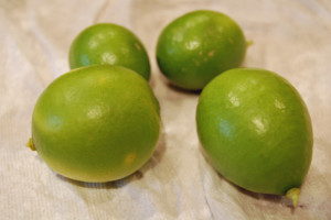 Key Limes grown in PA